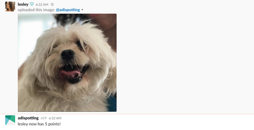 Slack bot with Python picture of a dog