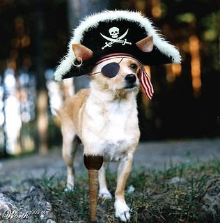 Image of a small dog with a peg leg, an eye patch, and a pirate hat with its ears adorably poking through.