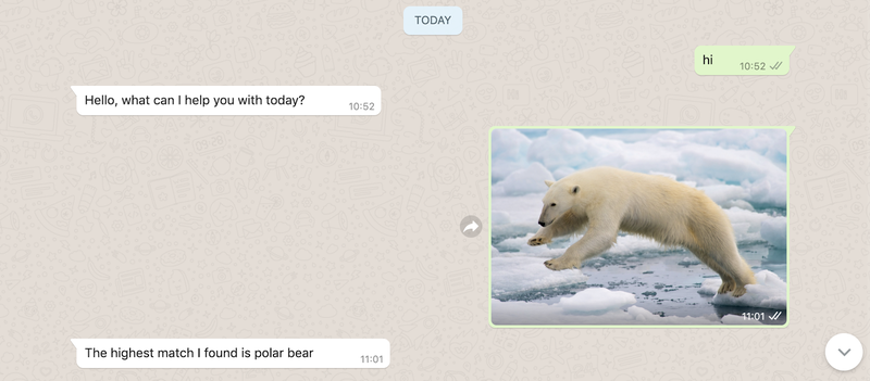 Image Classifier End Result Whatsapp