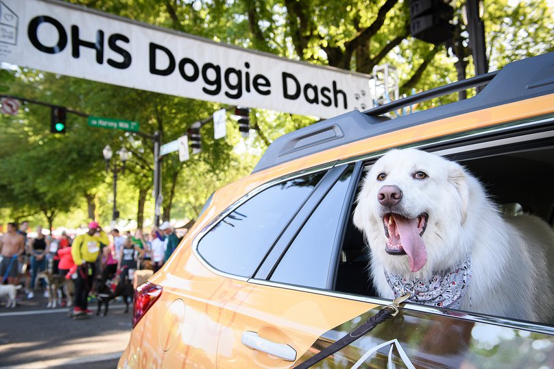 Oregon Human Society Doggie Dash
